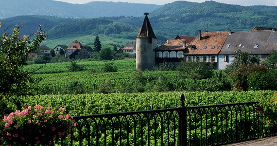 Riquewihr wine tour - Credits St Hippolyte Vineyard