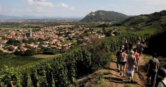 Avignon Wine Tour - visite vignobles cornas