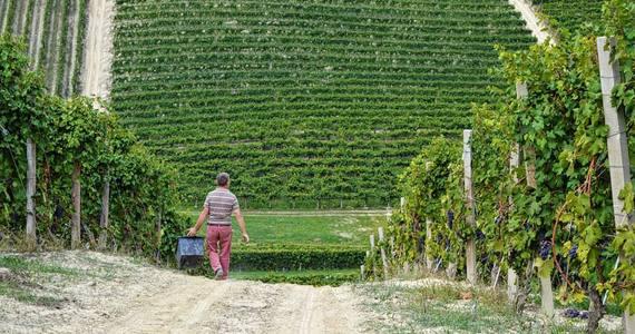 Piedmont wine tours