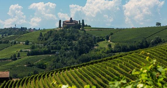 Turin Wine Tour - Vigneti