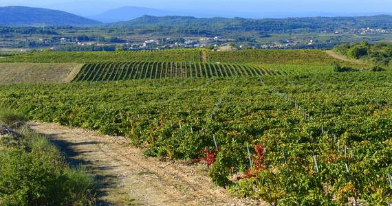 Minervois Wine Tour - Credits Chateau de Cabezac Vines