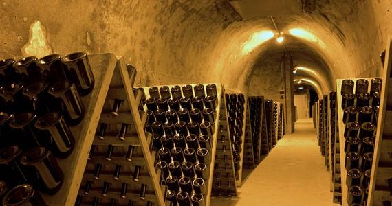 Vineyard tours OTAR - Carmen Moya