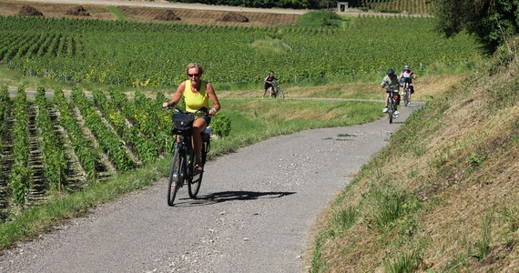 Wine tour in Burgundy