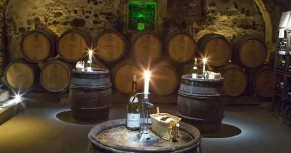 Vineyard tours Credits- Patriarhe Wine Company