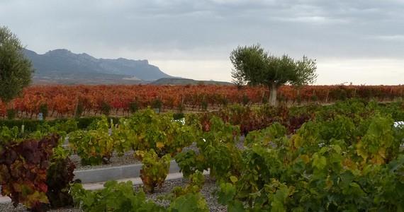 Rioja Wine Tours - Credits Rioja Vineyards