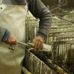 foie gras  by wikimedia commons