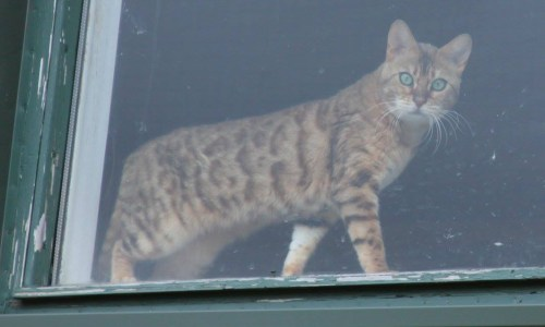 Police Closer To Finding Cause Of Cat Deaths