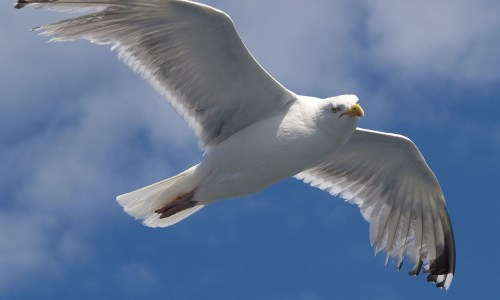Your Lifestyle Advice Of The Day: Do Not Boil Seagull Heads