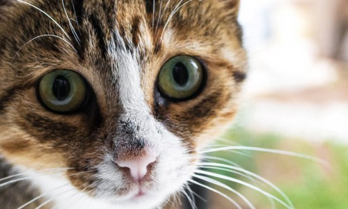 Another Cat Hotel Opens In Iceland