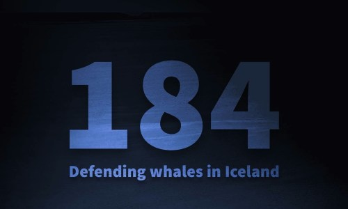 184: New Documentary On Icelandic Whaling