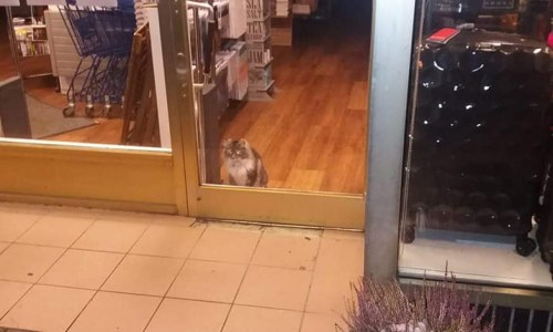 Icelandic Cat Spends The Night In A Bookstore, Elicits Sympathy