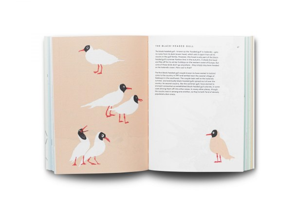 an internal picture of the BIRDS book