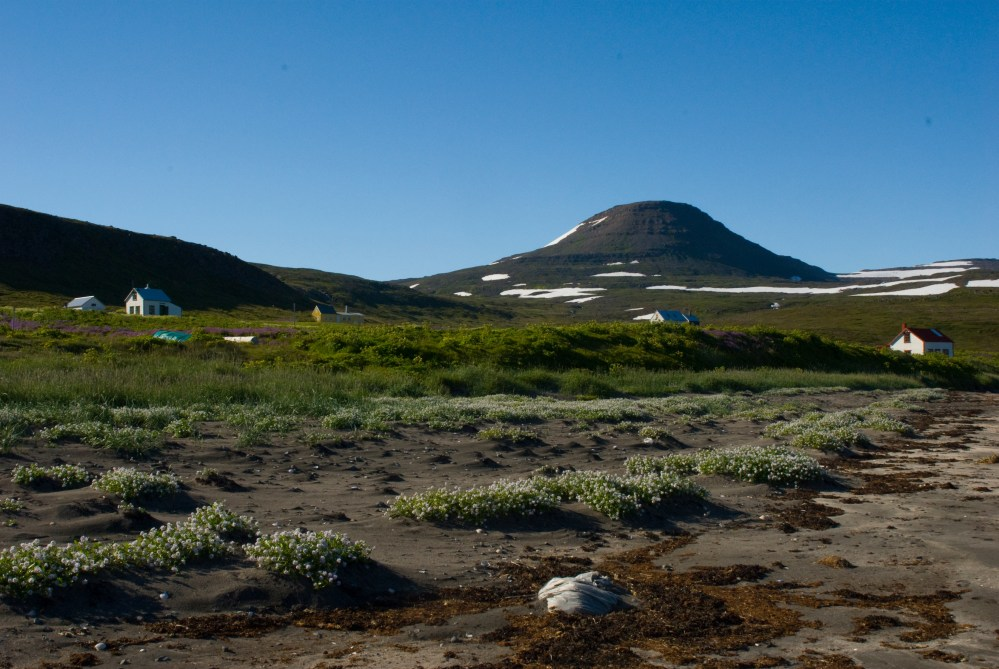 Best Of The Westfjords 2019: Best Tour