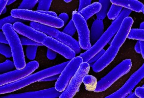 E. Coli Outbreak Raises Worries About Infection Spreading Further