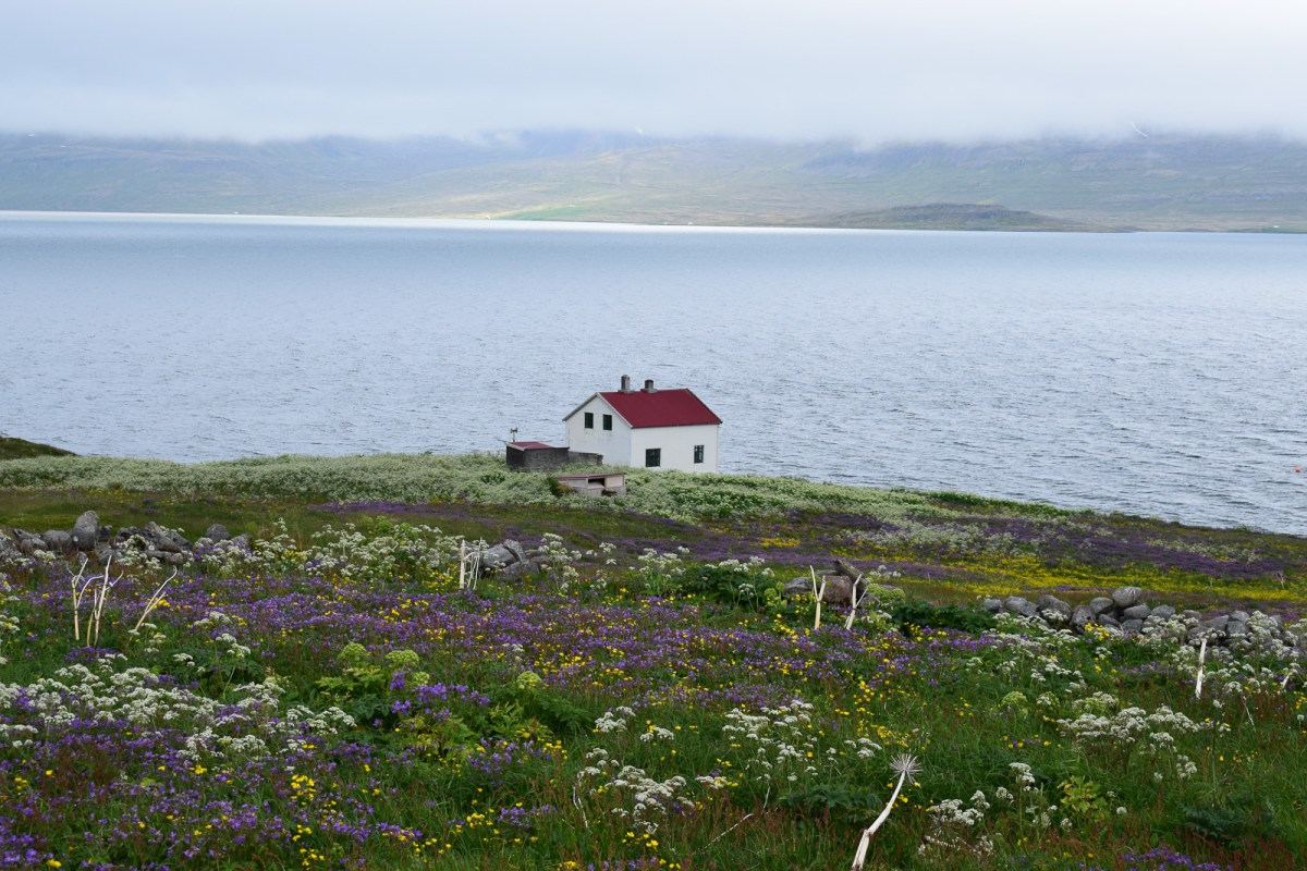Hornstrandir: A Westfjords Adventure On The Trail Of The Arctic Fox