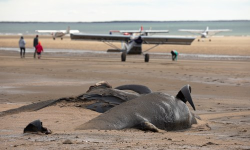 Gamlaeyri Whale Stranding: A Difficult Journey To The Whale Wreck