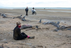 Ask A Marine Biologist: Why Do Whales Strand?