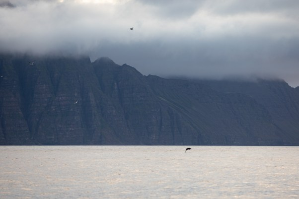 Unto The Breach: Encountering The Humpback Whale In Akureyri