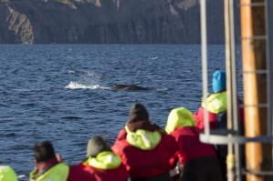 Whales in Iceland