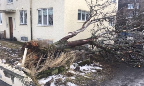 Storm Update: Flooded Homes, Fallen Trees, Downed Power
