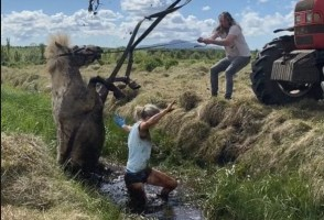 Horse Daringly Rescued From A Ditch In Grímsnes
