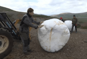 Young People in Þingeyri Cultivate Land With Old Hay Bales