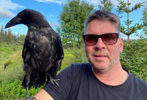 Raven Whisperer From Selfoss Gains Renown On Facebook