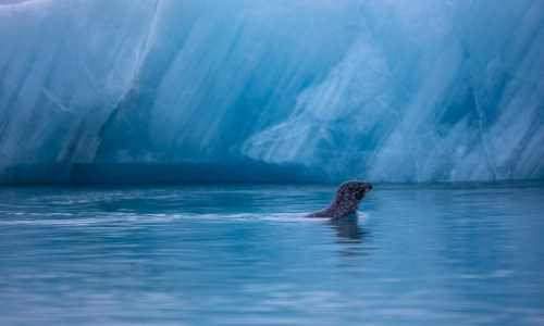 PHOTOS: Strong Tide And Seals At Jökulsárlón Ice Lagoon