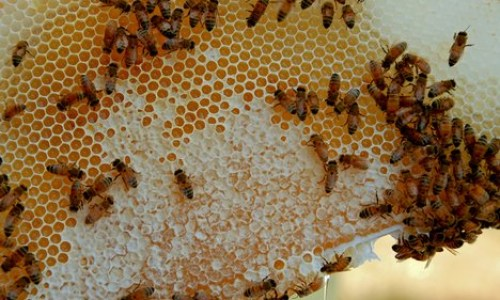 Justice For Iceland's Beekeepers