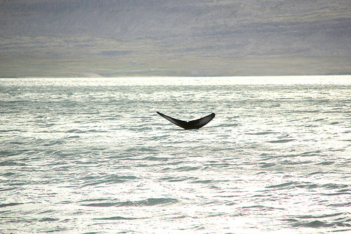 The Case For Sustainable Whaling