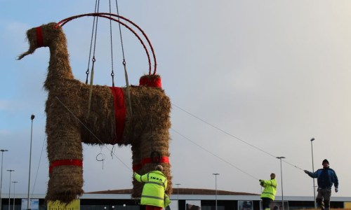 Christmas Goat Miraculously Survives Holiday Season