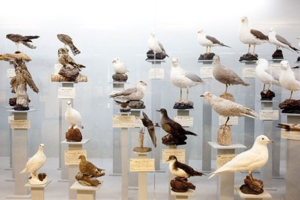 Bolungarvík Is The Bird Nerd's Paradise