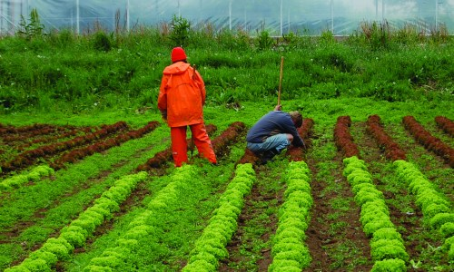 …And On His Farm He Had Some Lettuce. E-I-E-I-O – Surviving A Weekend WWOOFing In Egilsstaðir