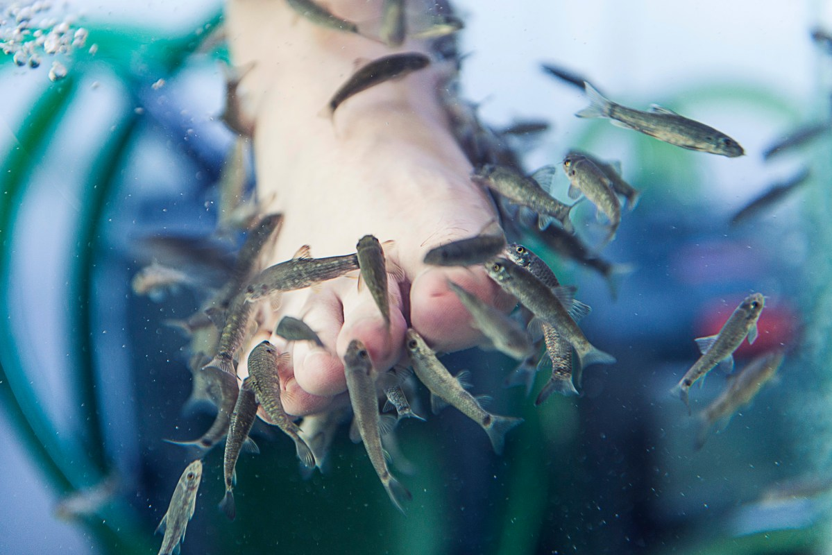 Delicious Feet: A Day At A Fish Spa