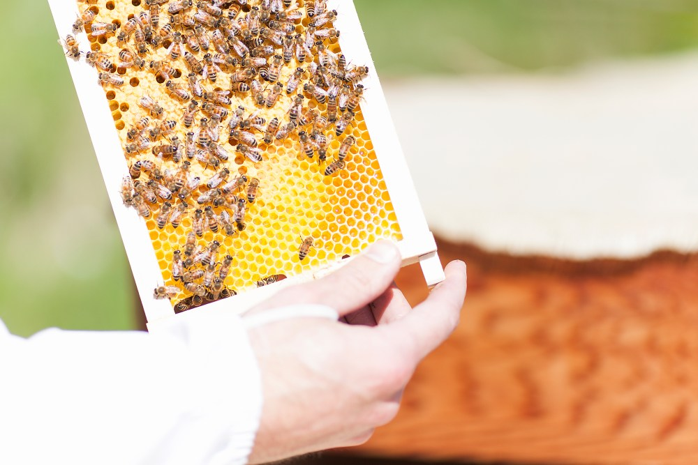In The Eye Of The Swarm: The Beekeepers Of Iceland