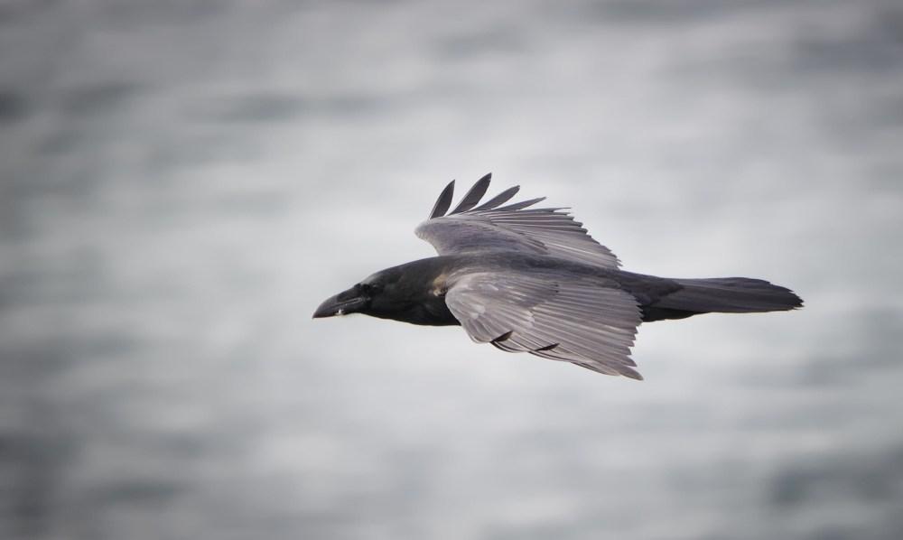 Just Sayings: Those White Ravens