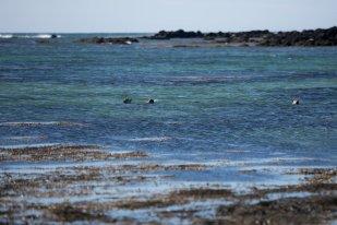 Seals having fun