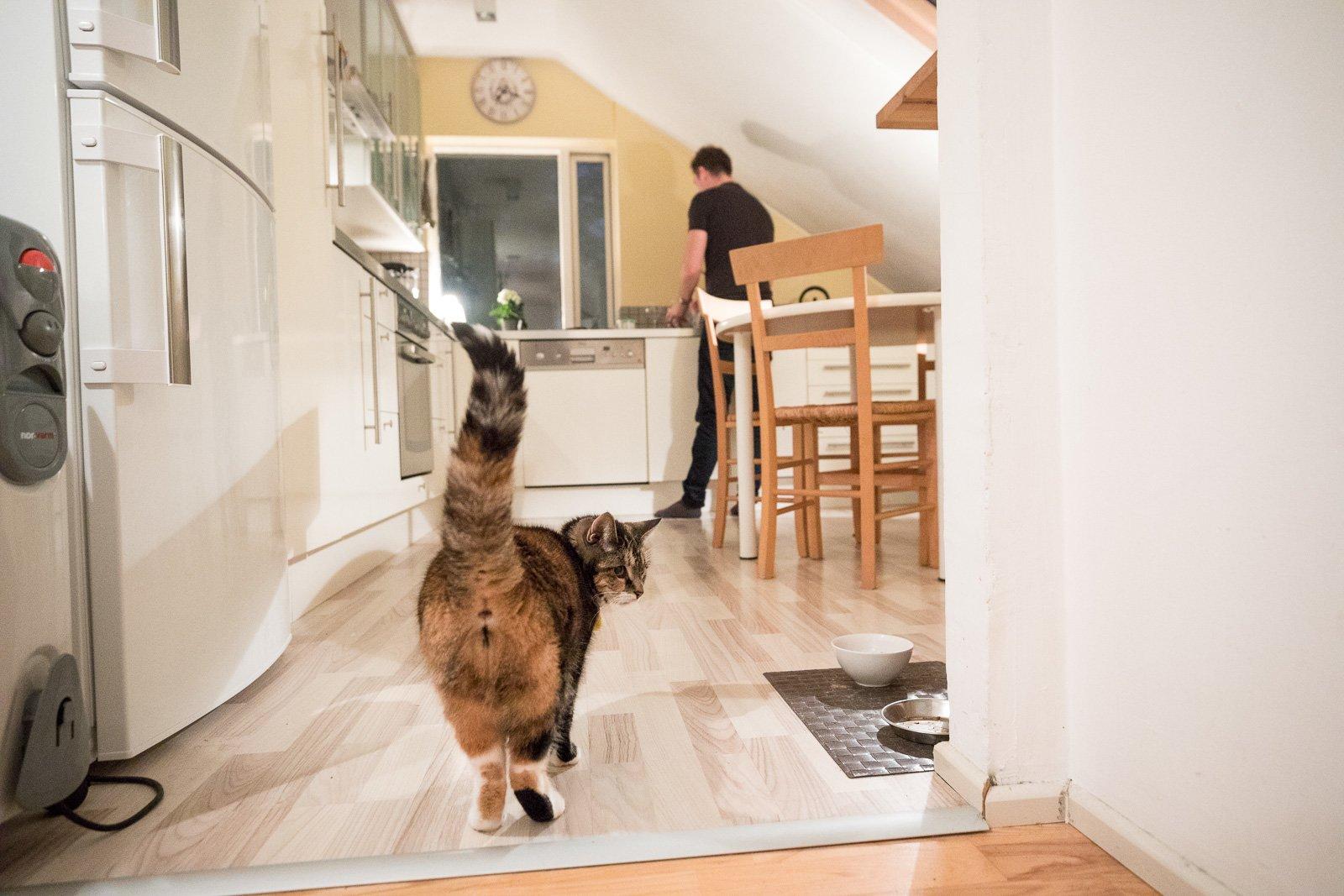 Icelandic Cat Gets Stuck In Mud, Hilarity Ensues