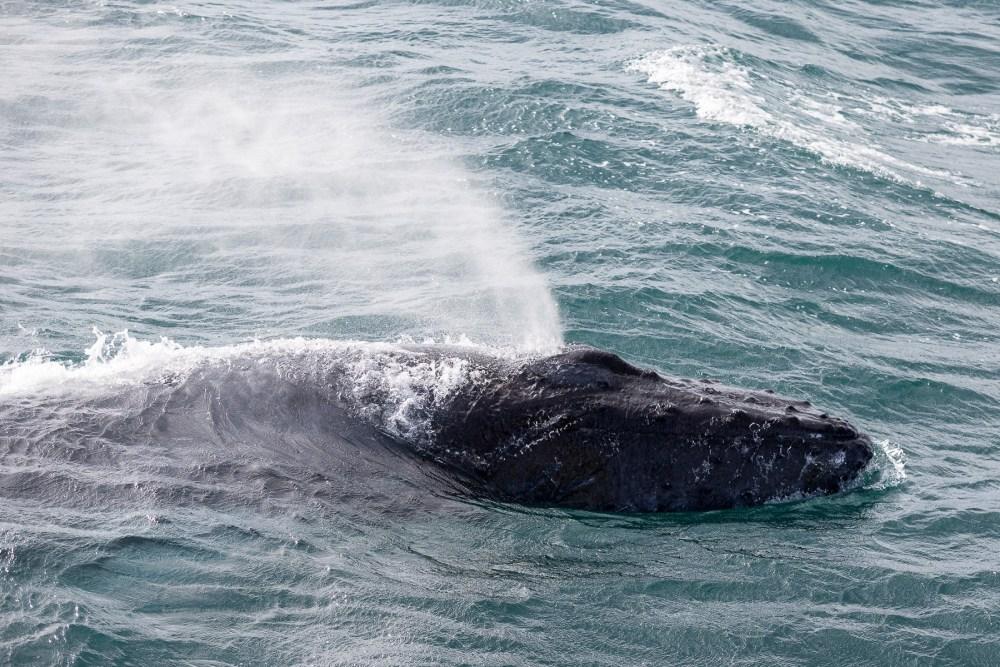 Photo Gallery: Whale Watching In Reykjavík
