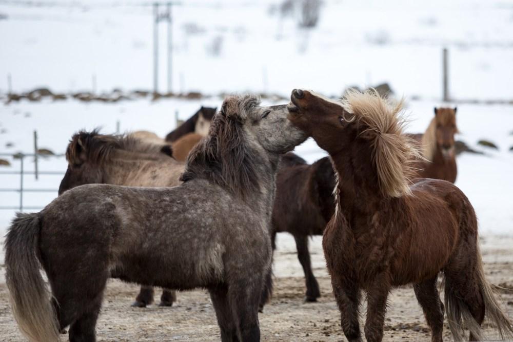 Island Life: Horse Rentals!