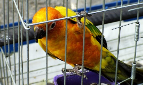Smuggled Bird Detained At Icelandic Border, Later Deported