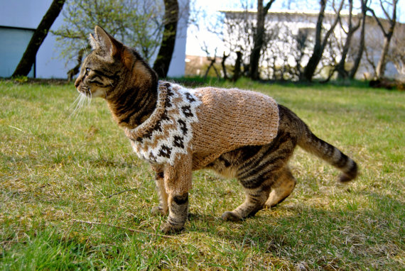 Reykjavík Catwalk: A Brief History Of Cats In Iceland