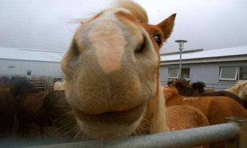 Police Issue Warning Of Horses On The Loose