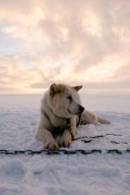DogSledding_TimotheeLambrecq-15