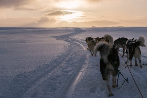 DogSledding_TimotheeLambrecq-23