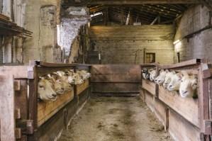 Grásteinn_farm&hike_TimotheeLambrecq_web-15