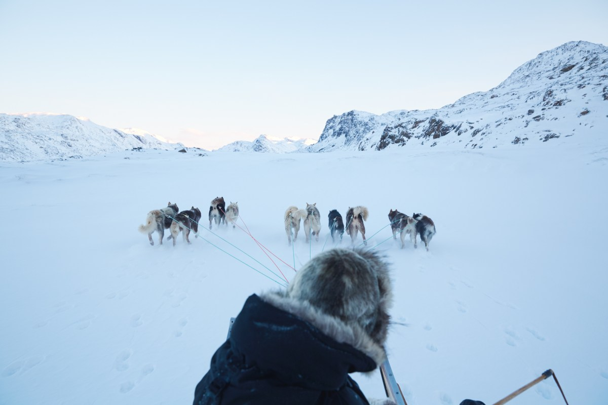 PHOTOS: Grapevine In Greenland – The Director's Cut