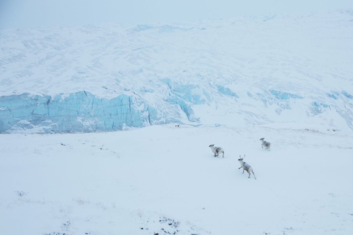 Into The Wild: A Week Of Nature And Culture In Greenland