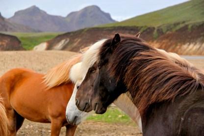 Horses Natsha Nandabhiwat