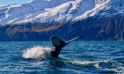 Of Space, Whales And Antarctica: A Weekend In Húsavík
